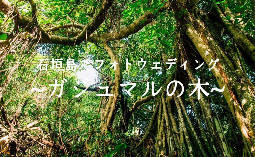 石垣島北部のガジュマルの木でフォトウェディング -Prewedding at Banyan tree-