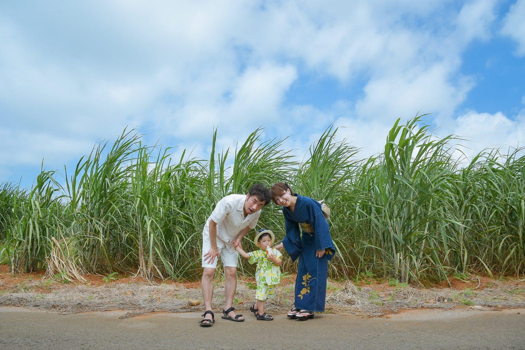 小浜島のさとうきび畑
