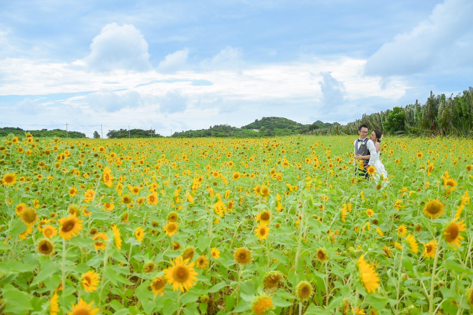 【レポ#25】S&M様は川平ビーチ&ひまわり畑&ガジュマルで結婚写真